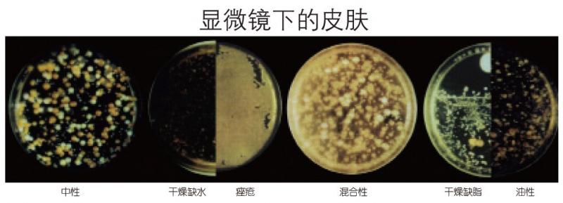 显微镜下的皮肤